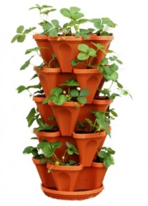 Best Way To Grow Strawberries In Containers