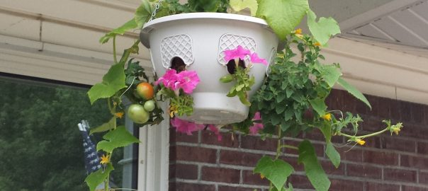 How to Grow Vegetables in Hanging Baskets