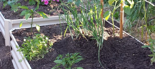 How to Grow Vegetables in a Raised Garden Bed